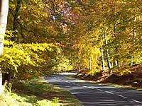 Photo of autumn on Cannock Chase